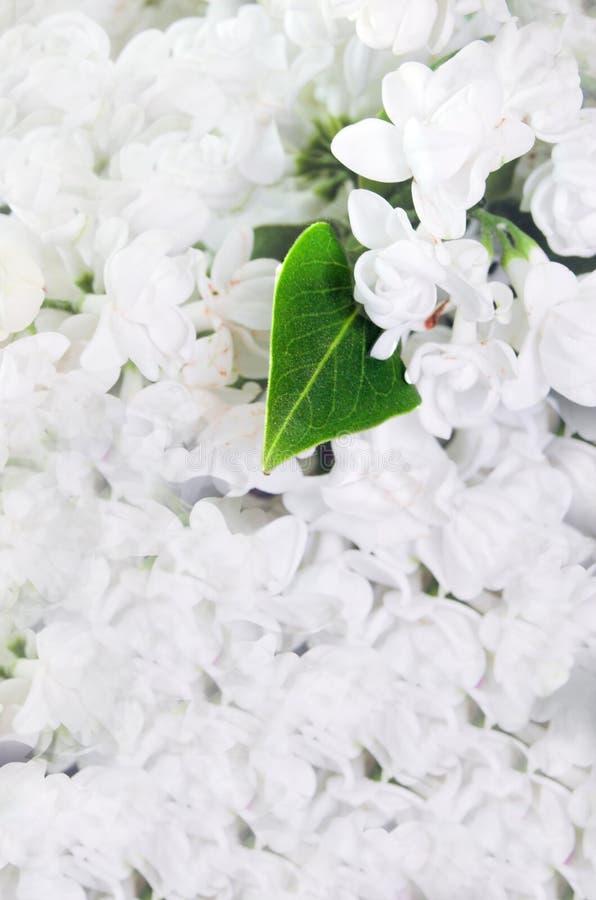 Natuurlijke decoratie stock foto