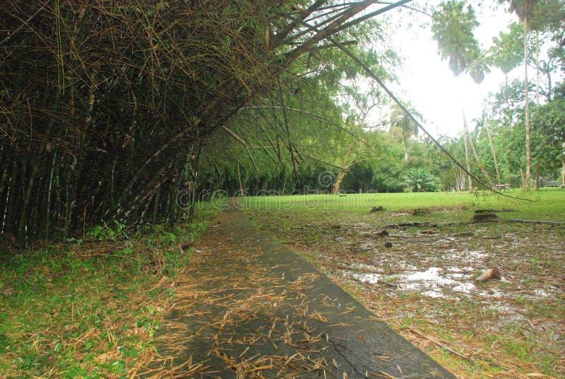Natuurlijke die scène in Toppark wordt gevangen, Gamboa-gebied, Republiek Panama stock fotografie
