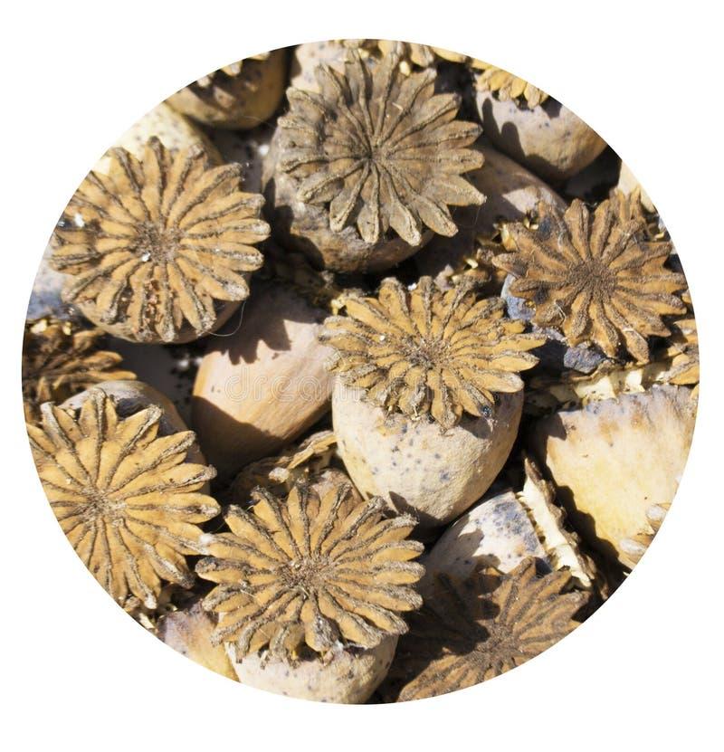 Natuurlijke die textur van droge bloemen wordt gebouwd stock fotografie