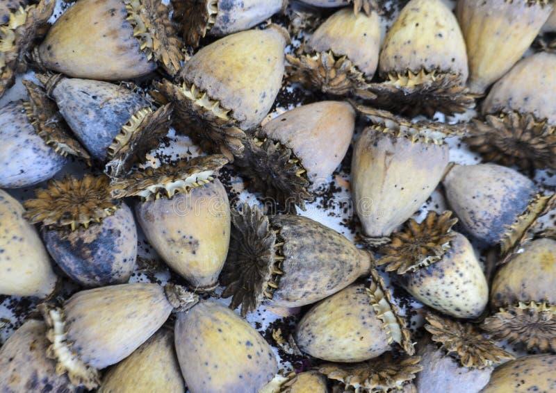 Natuurlijke die textur van droge bloemen wordt gebouwd royalty-vrije stock afbeeldingen