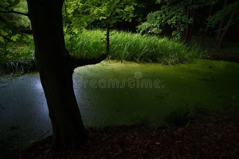 Natuurlijke die vulklei van water met vijveronkruid wordt behandeld stock foto's