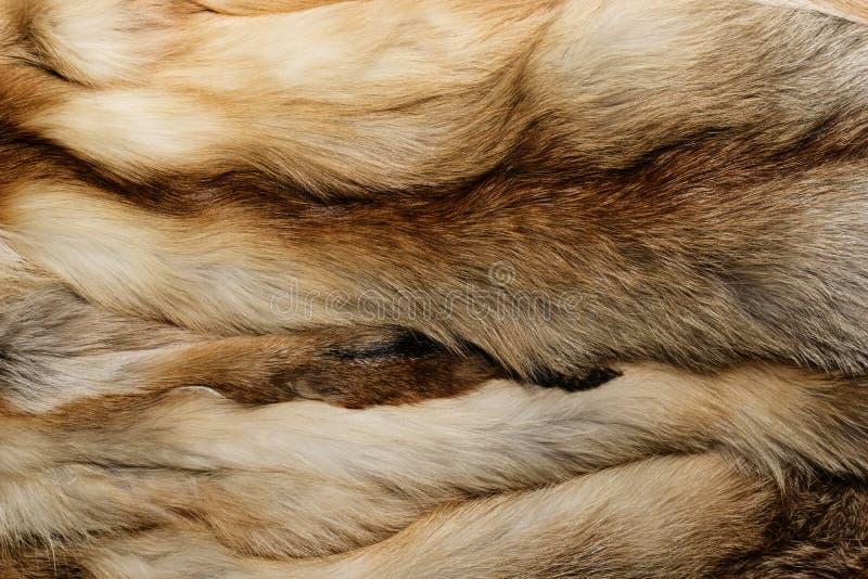 Natuurlijke dierlijke bonttextuur als achtergrond het gele close-up van de voswol stock fotografie