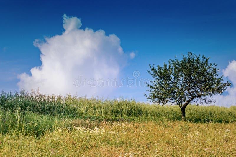 Natuurlijke fantasie stock foto