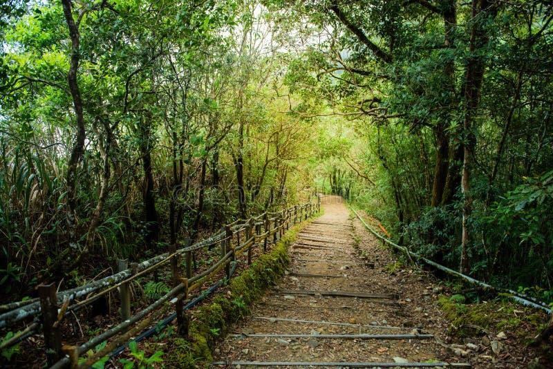 Natuurlijke gang in tropisch bos in kinabalu nationaal park in Maleisi? stock foto