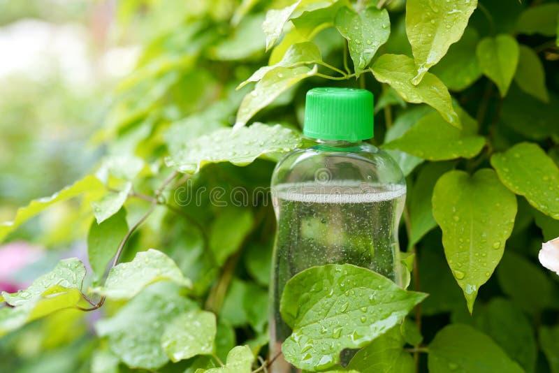 Natuurlijke geneeskunde of schoonheidsmiddelen Fles in groene bladeren stock fotografie