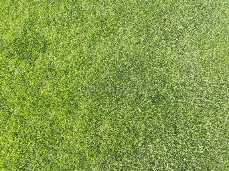 Natuurlijke grasstructuur als achtergrond golfterrein van bovenaanzicht met een authentieke grassy gras voor milieuachtergrond stock afbeelding