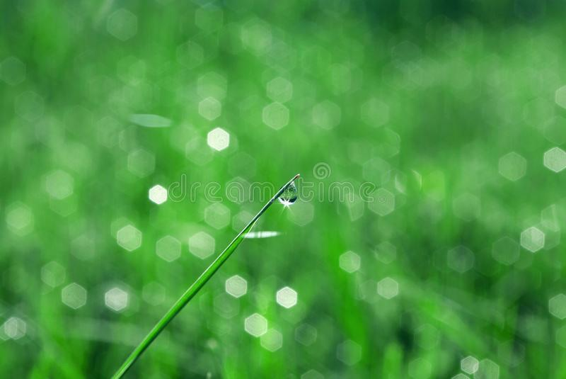 Natuurlijke groene Achtergrond Druppeltjes van dauw op het gras royalty-vrije stock afbeeldingen