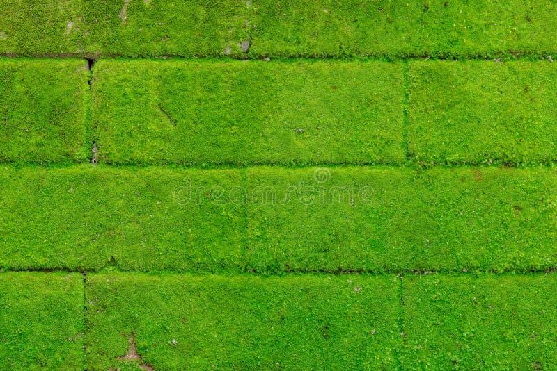 Natuurlijke groene bakstenen muur stock afbeeldingen