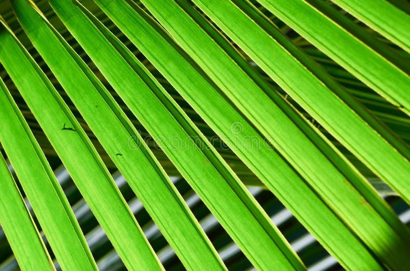 Natuurlijke groene kleur onder zonlicht stock fotografie