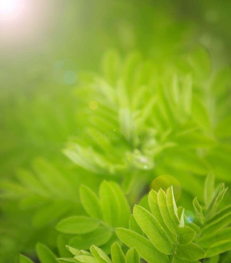 Natuurlijke groene vage achtergrond, zachte nadruk royalty-vrije stock fotografie