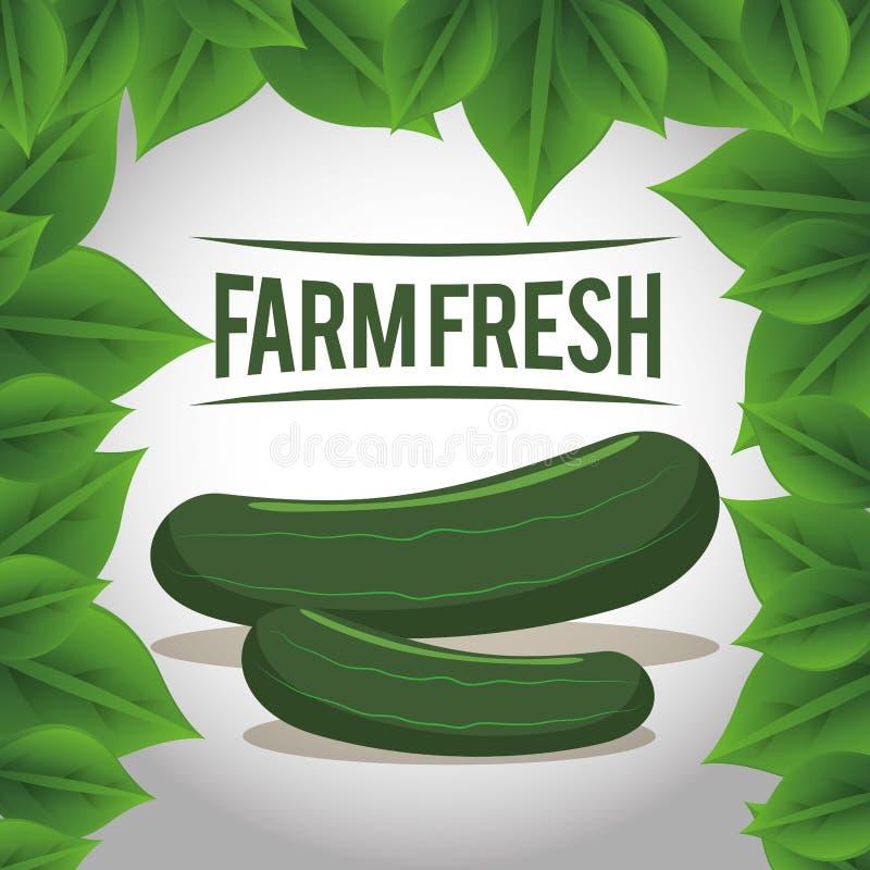 Natuurlijke groenten van de landbouwbedrijf de verse komkommer vector illustratie