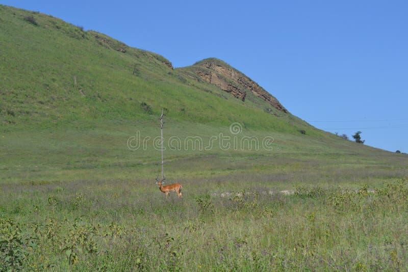 Natuurlijke Habitat royalty-vrije stock afbeelding