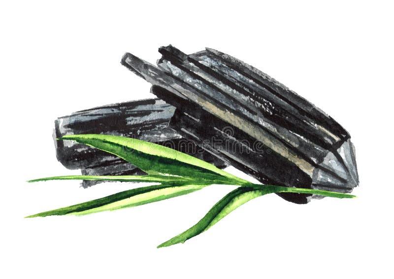Natuurlijke houten houtskool met groene stam Waterverfhand getrokken die illustratie op witte achtergrond wordt geïsoleerd stock illustratie