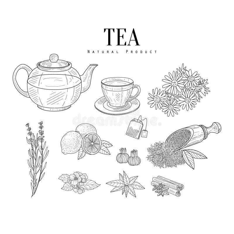 Natuurlijke Ingrediënten en Theehand Getrokken Realistische Schetsen stock illustratie