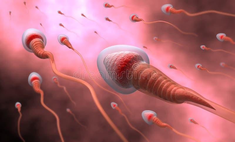 Natuurlijke inseminatie - sperma royalty-vrije illustratie
