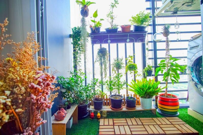 Natuurlijke installaties in de hangende potten bij balkontuin royalty-vrije stock fotografie