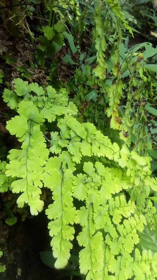Natuurlijke installaties en aard groen bos royalty-vrije stock afbeelding