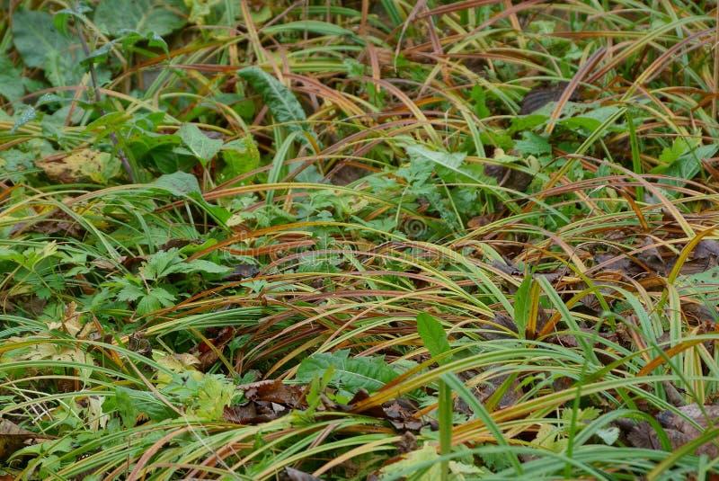 Natuurlijke installatietextuur van groen en bruin lang gras royalty-vrije stock foto