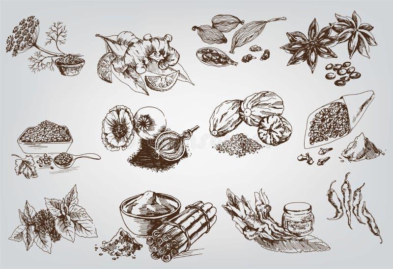 Natuurlijke kruiden stock illustratie