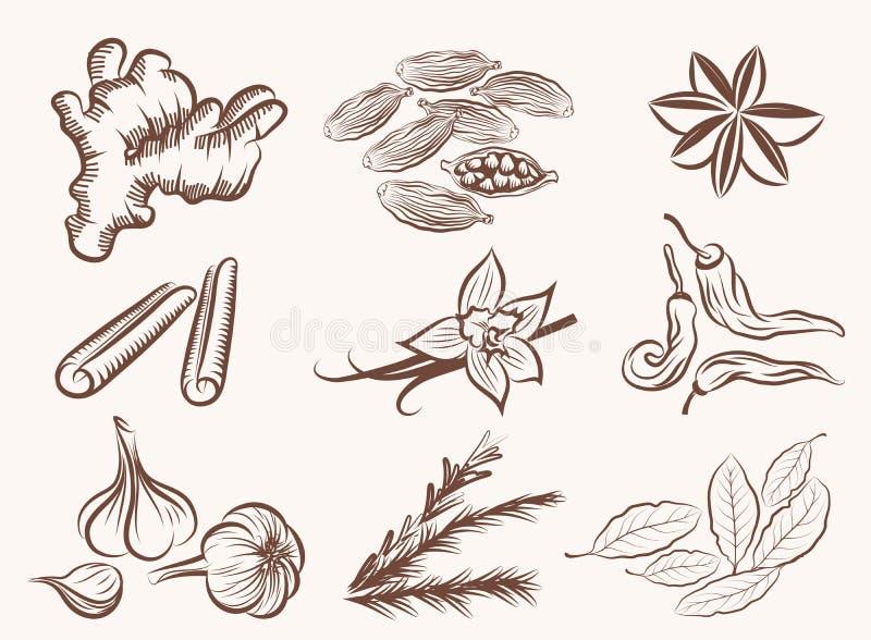Natuurlijke kruiden vector illustratie