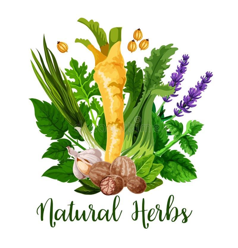 Natuurlijke kruiden en groene organische kruidenkruiden vector illustratie