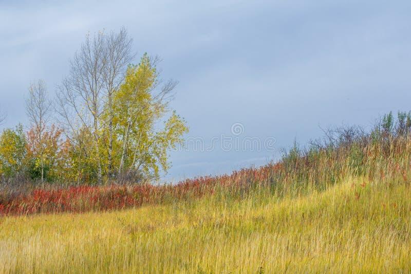 Natuurlijke landschappen Autumn Landscape Rode en gele bladerenstai stock foto