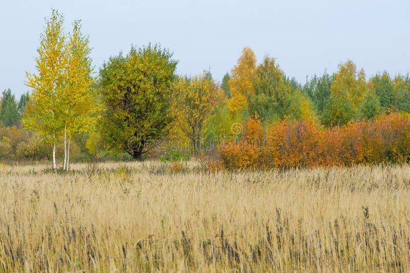 Natuurlijke landschappen Autumn Landscape Rode en gele bladerenstai royalty-vrije stock foto