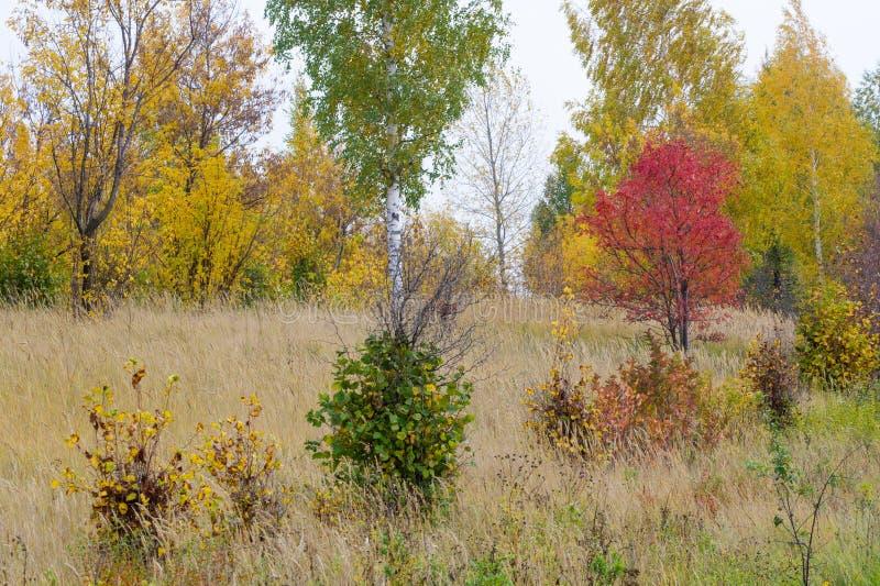 Natuurlijke landschappen Autumn Landscape Rode en gele bladerenstai stock afbeelding