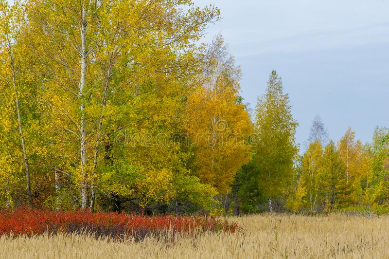 Natuurlijke landschappen Autumn Landscape Rode en gele bladerenstai stock afbeeldingen