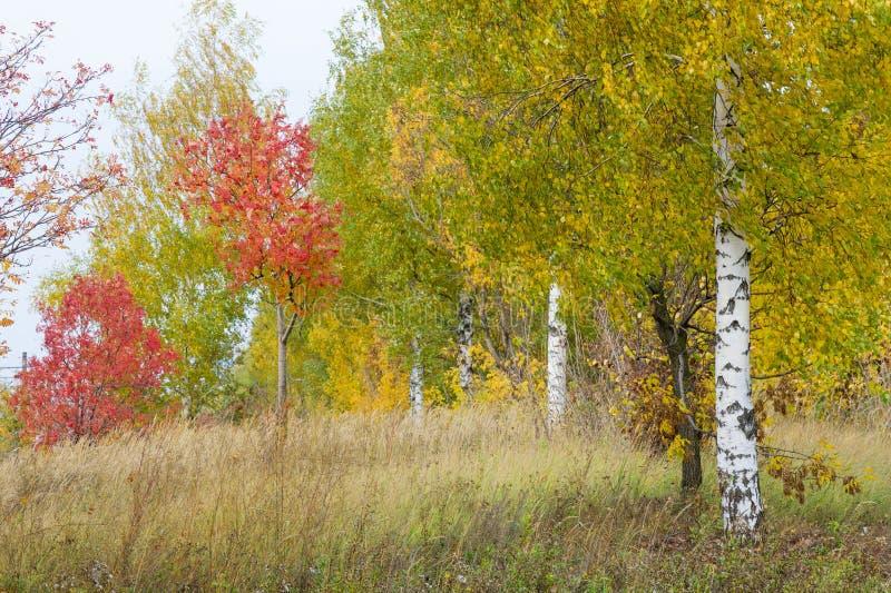 Natuurlijke landschappen Autumn Landscape Rode en gele bladerenstai royalty-vrije stock fotografie