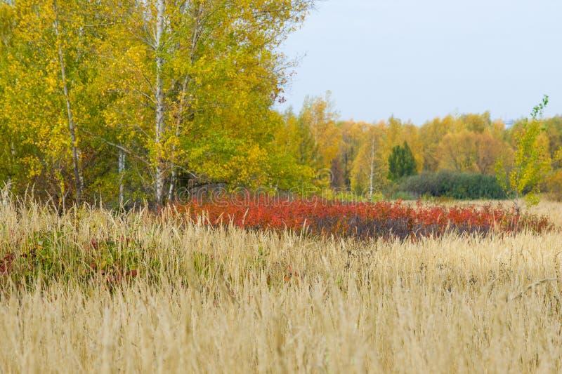 Natuurlijke landschappen Autumn Landscape Rode en gele bladerenstai stock foto's