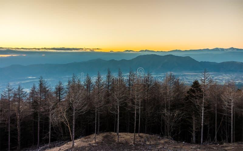 Natuurlijke landschapsmening van boombos en berg in de avond stock afbeelding