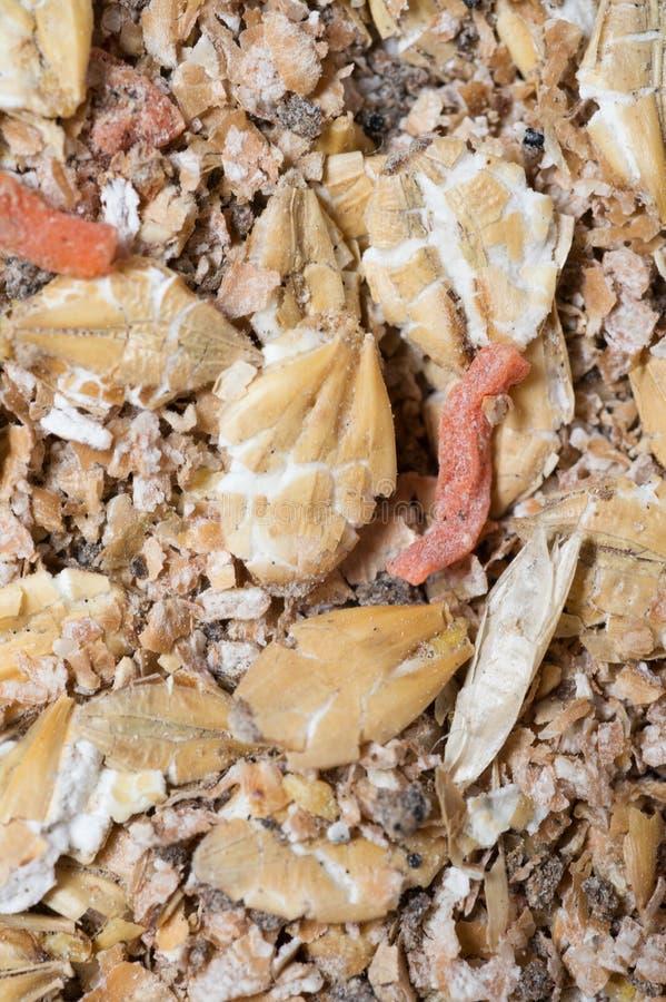 Natuurlijke muesliachtergrond met gerst en wortel voor paard extrime macro stock fotografie
