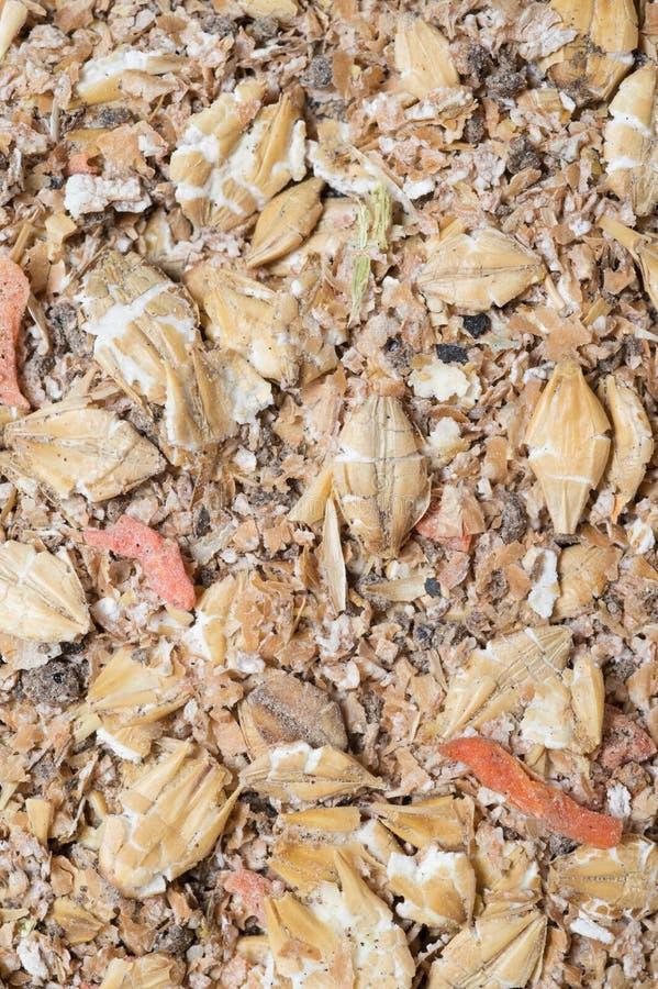 Natuurlijke muesliachtergrond met gerst en wortel voor paard Lage diepte van gebied royalty-vrije stock fotografie
