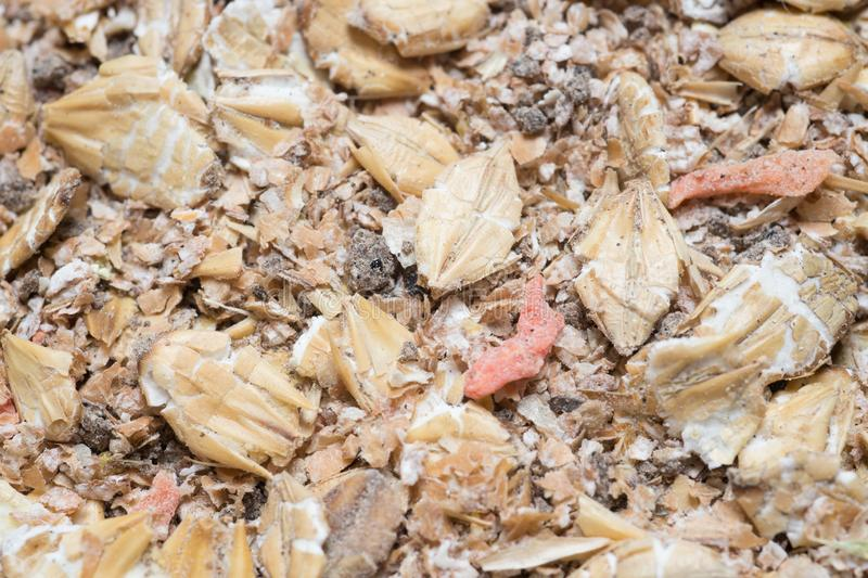 Natuurlijke muesliachtergrond met gerst en wortel voor paard Lage diepte van gebied stock afbeeldingen