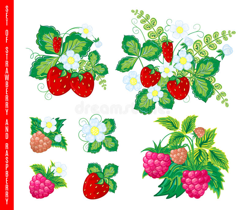 Natuurlijke organische bessenreeks Vector illustratie vector illustratie