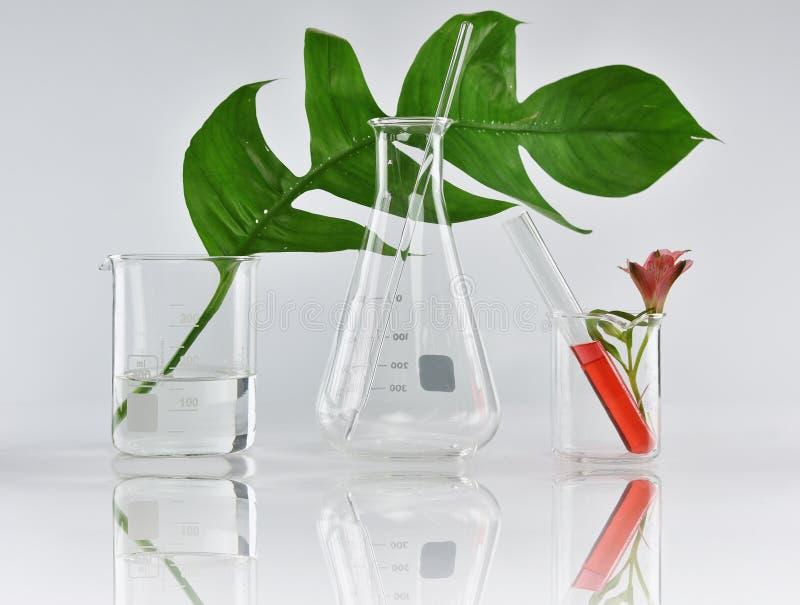 Natuurlijke organische plantkunde en wetenschappelijk glaswerk, Alternatieve kruidgeneeskunde, Natuurlijke de schoonheidsproducte royalty-vrije stock fotografie