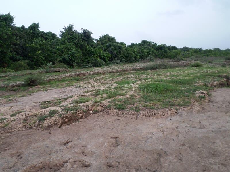 Natuurlijke plaatsfoto's in talala Gujarat India stock afbeeldingen