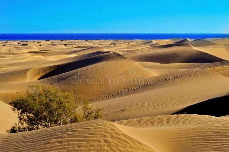 Natuurlijke Reserve van Duinen van Maspalomas, in Gran Canaria, Spanje royalty-vrije stock afbeeldingen
