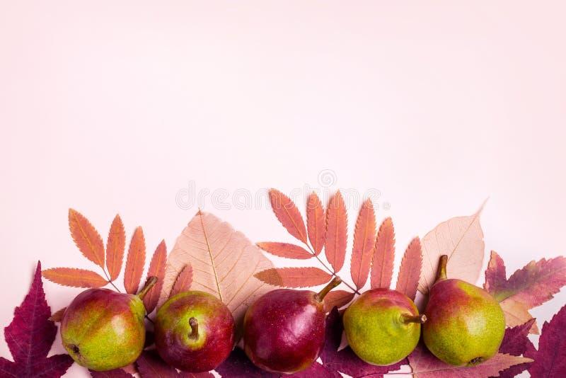 Natuurlijke samenstelling van droge roze bladeren en peren op roze achtergrond De oogstconcept van de herfst Sterke kunst selecti royalty-vrije stock foto's