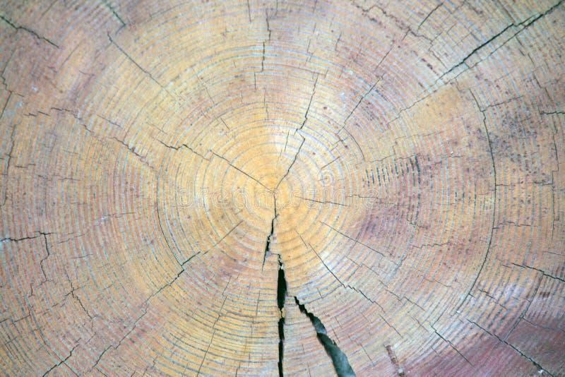 Natuurlijke scherpe houten stompachtergrond stock foto