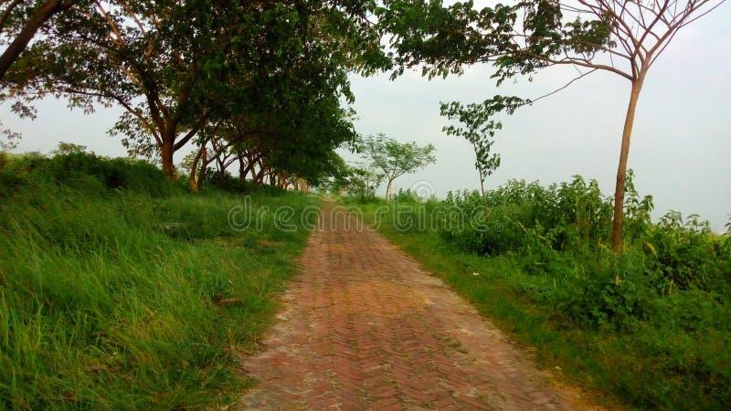 Natuurlijke schoonheid van Bangladesh stock afbeeldingen