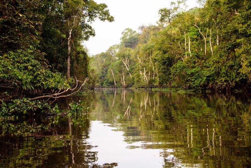 Natuurlijke schoonheid van de Kinbatangan-rivier in het Borneon-regenwoud stock foto