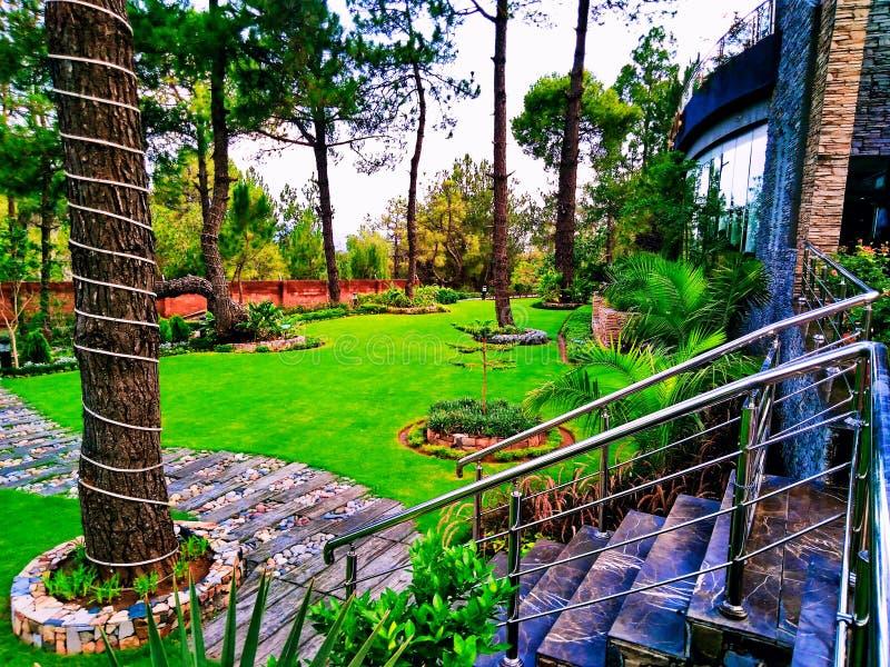 Natuurlijke schoonheid van gras en bomen dat zeer milieuvriendelijk zijn De charme en de schoonheid van royalty-vrije stock foto
