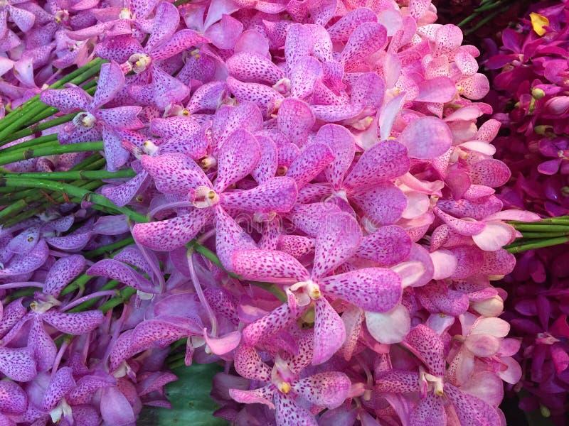 Natuurlijke schoonheidsbloem in Bangkok stock afbeelding