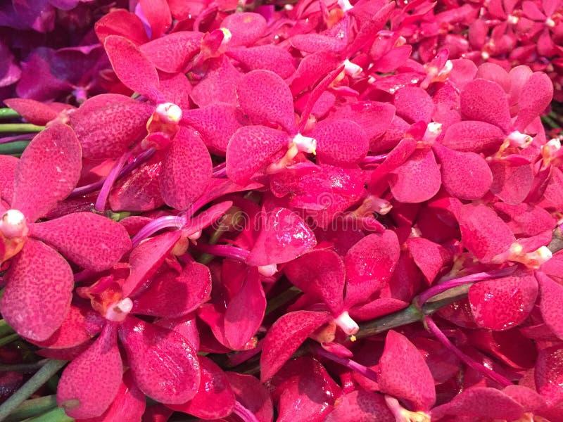 Natuurlijke schoonheidsbloem in Bangkok stock afbeeldingen