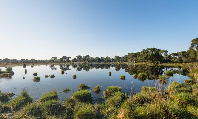 Natuurlijke spiegel in de zomer royalty-vrije stock afbeelding