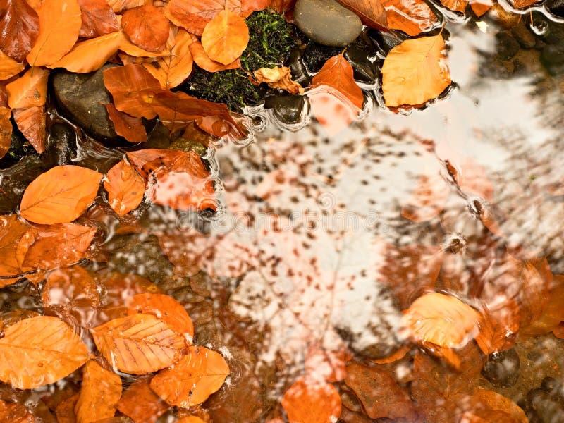 Natuurlijke spiegel in oranje kader Gevallen beukbladeren in water van bergrivier royalty-vrije stock foto