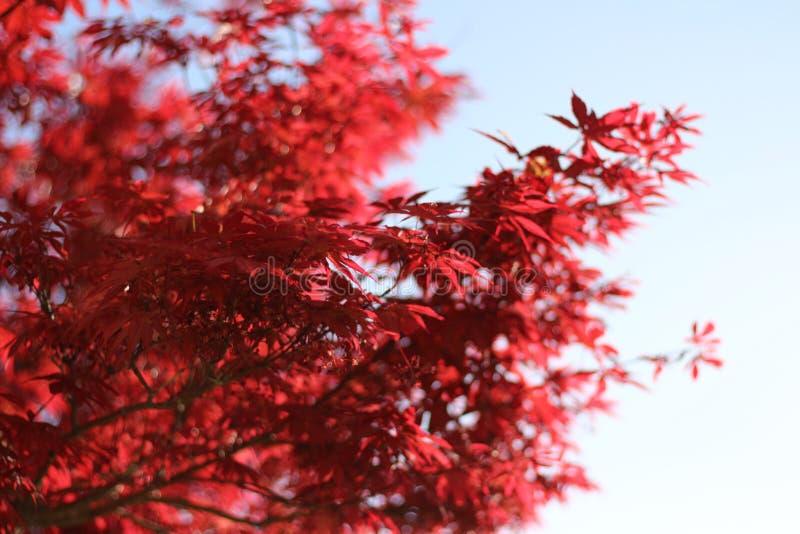 Natuurlijke Textuur royalty-vrije stock foto