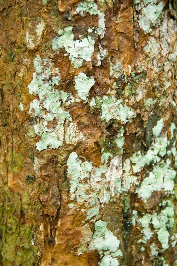 Natuurlijke textuur van boom in bos royalty-vrije stock afbeeldingen